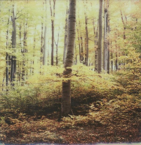 Simon Fröhlich Wald