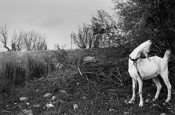 Tomeu Coll Badlands Raised by Bones