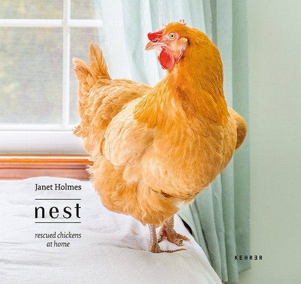 Janet Holmes Nest Rescued Chickens at Home