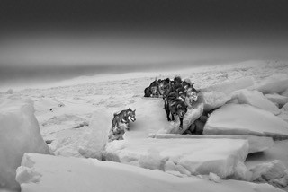 Ragnar Axelsson COLLECTOR´S EDITION: Arctic Heroes - Motiv 4 A Tribute to the Sled Dogs of Greenland