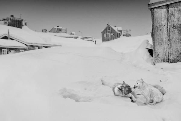 Ragnar Axelsson COLLECTOR´S EDITION: Arctic Heroes Motiv 5: »Tiniteqilaaq, Greenland« (2015)