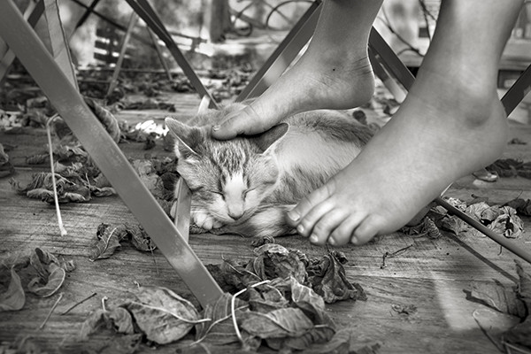 Alain Laboile Summer of the Fawn