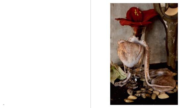 Vera Mercer Photographs and Still Lifes