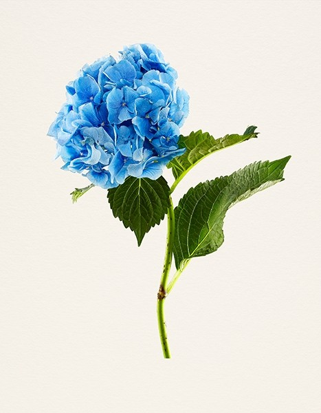 Kenji Toma SIGNED: The Most Beautiful Flowers