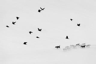 Ragnar Axelsson COLLECTOR´S EDITION: Arctic Heroes Motif 1: »Ittoqqortoormiit, Greenland-1« (2017)