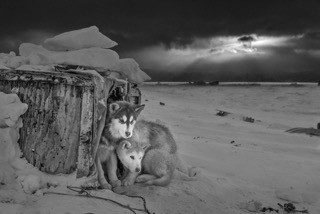 Ragnar Axelsson COLLECTOR´S EDITION: Arctic Heroes Motif 2: »Qaanaaq, Greenland« (2019)